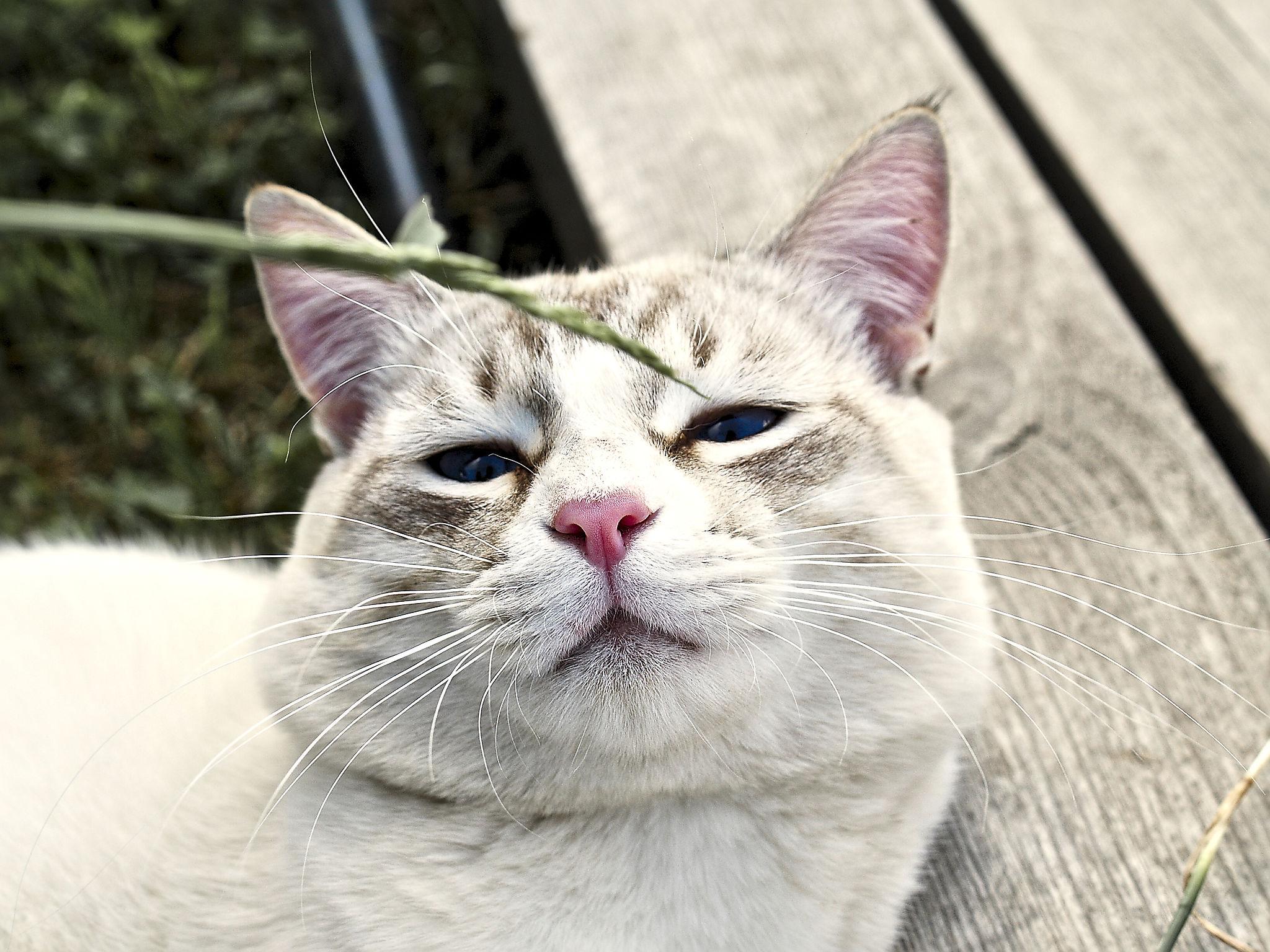 Котовые щщи